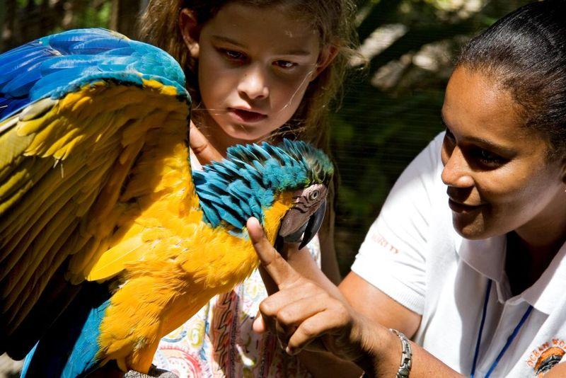 Ocean World bird interaction