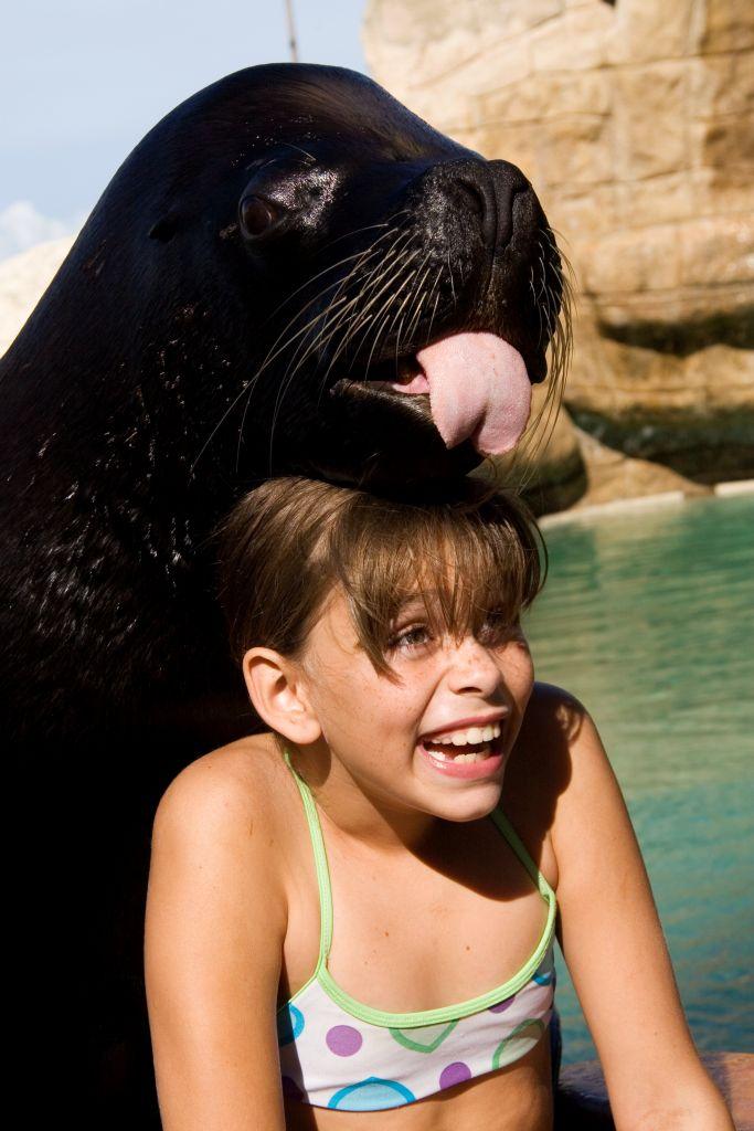 Ocean World sea lion encounter