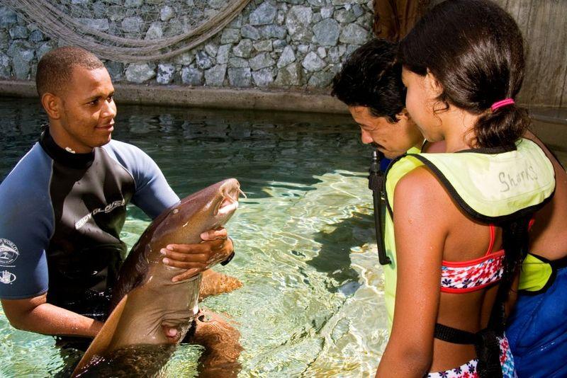 Ocean World shark out