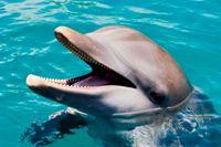 Ocean World dolphin smile