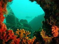 Snorkel_aruba_reef