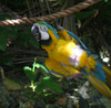 Jamaica treasure reef parrot